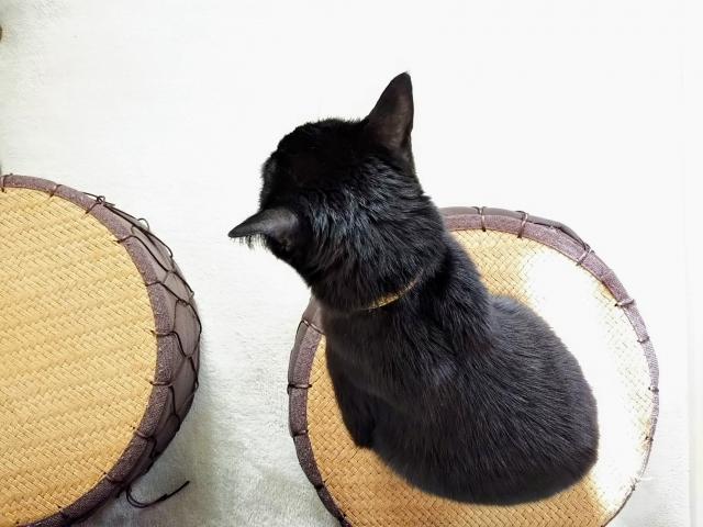 スマートデバイス活用で猫の留守番対策をより快適に!安心できる方法をご紹介
