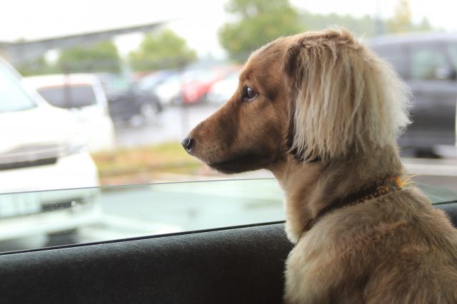 愛犬がリラックスして留守番できる対策方法!スマートデバイス活用でより安心!